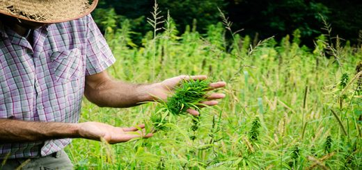 Legalization of hemp In World